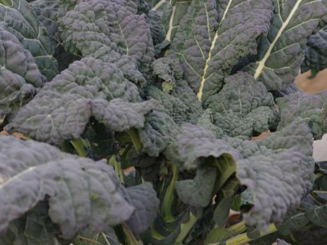 120128broccoli