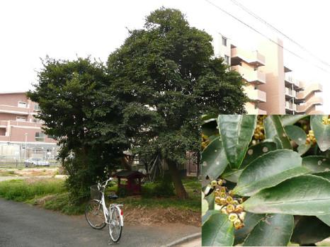 080331hisakaki_b