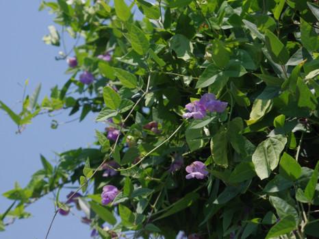 150916snail_flower2