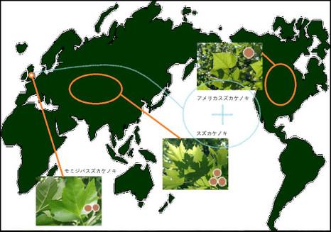 170626platanus_map_b