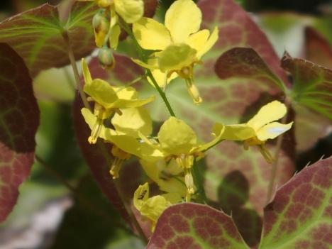 Eperralderianum2