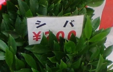 100106siba
