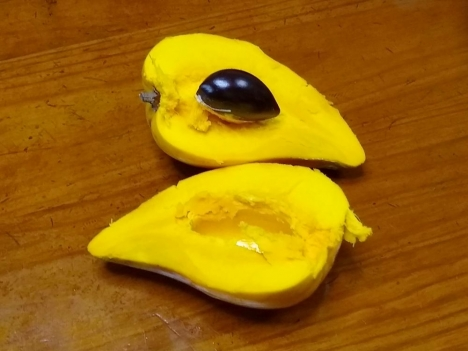 Pouteria-campechiana2